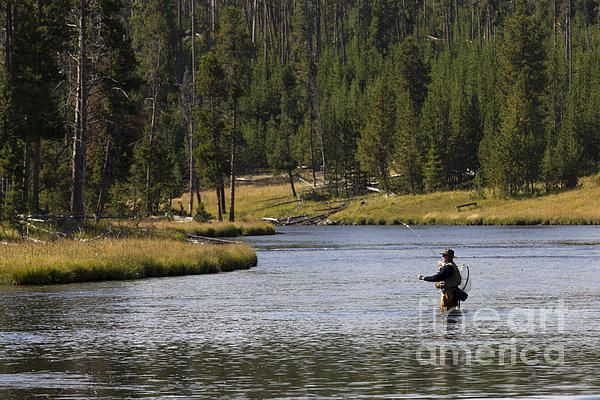 Fly Fishing In The Firehole River Yellowstone By Dustin K Ryan Fly Fishing Yellowstone National Park Park Art