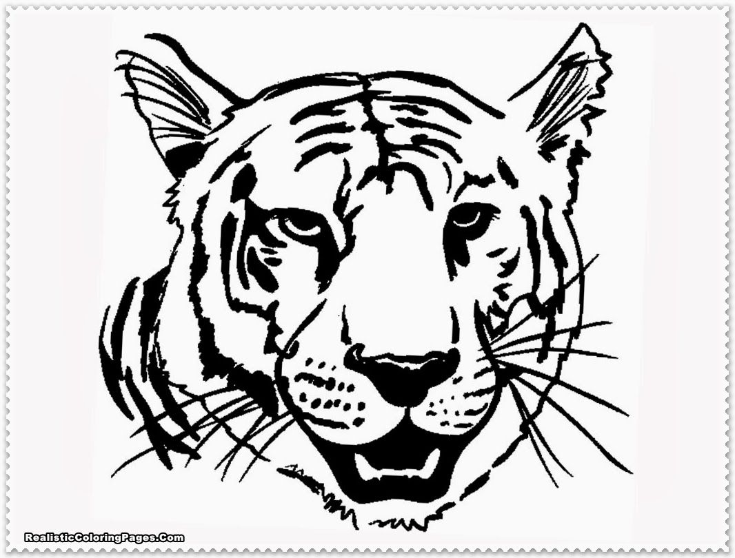 Realistic Tiger Coloring Pages  Animal coloring pages, Tiger
