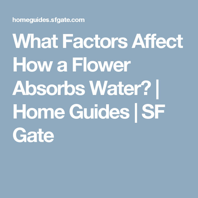 What Factors Affect How a Flower Absorbs Water? | Home Guides | SF Gate