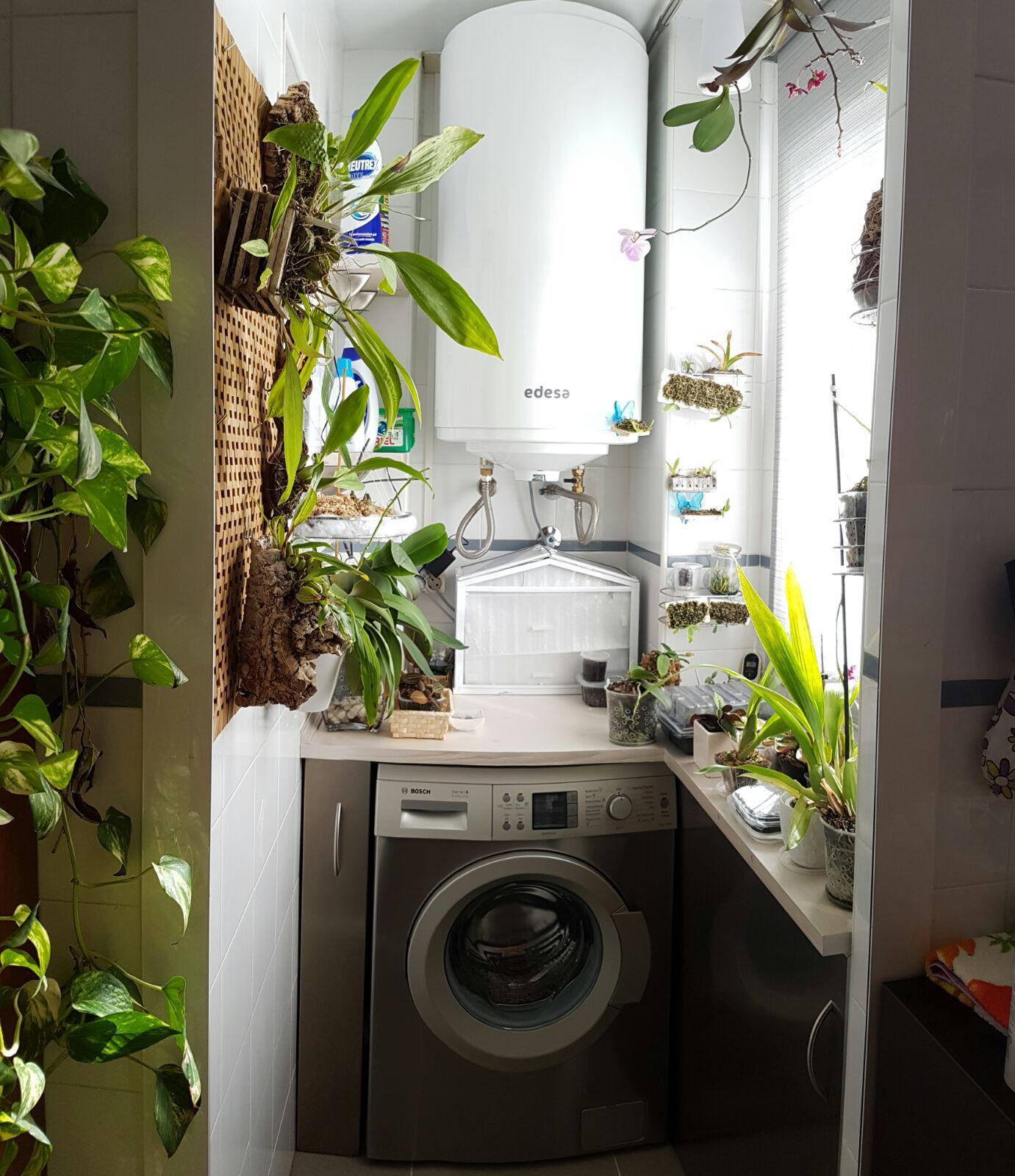 Lavadero orquídea orchid wash room