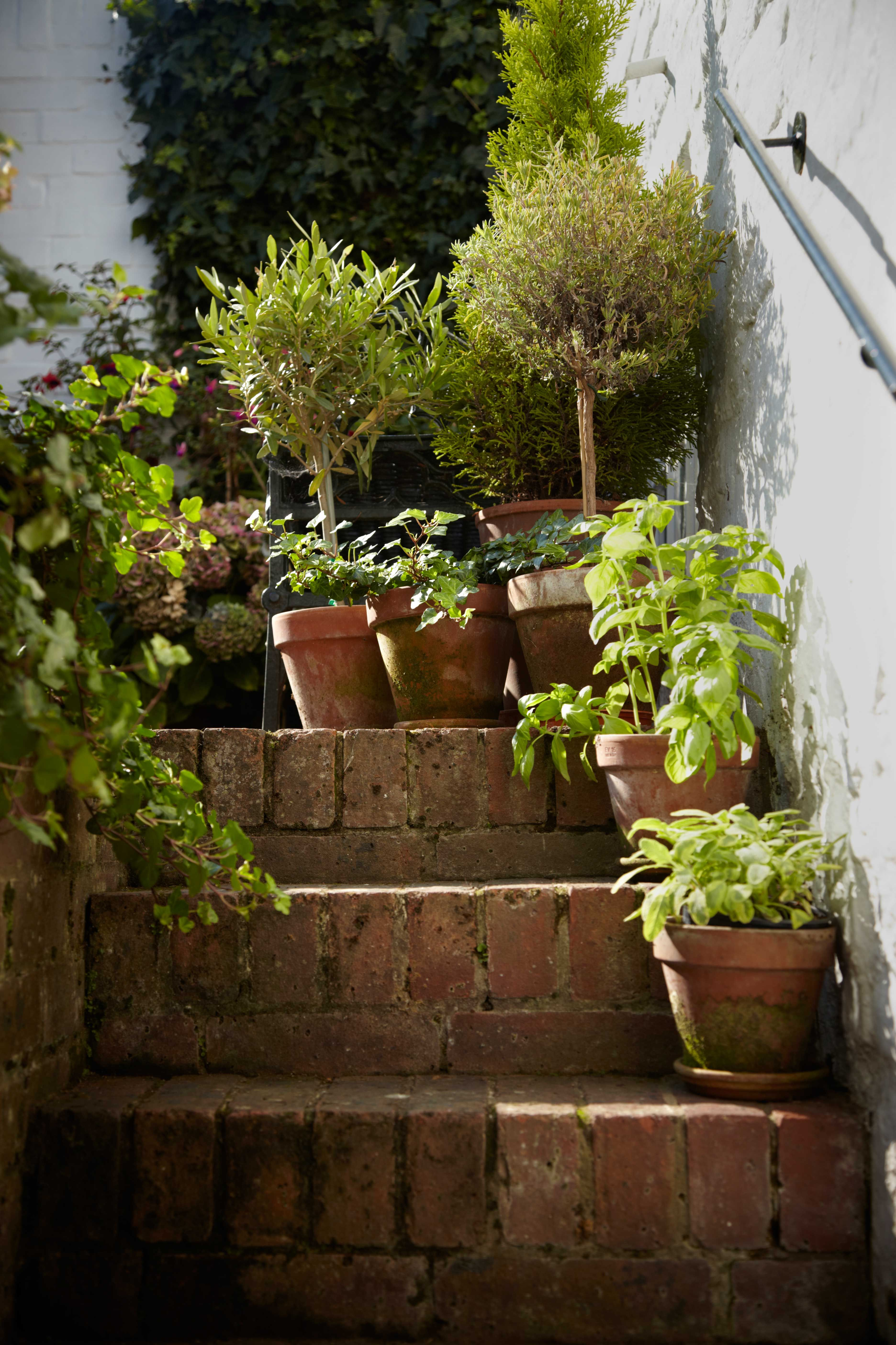 5 things every new gardener needs to know | Pinterest | Terracotta ...