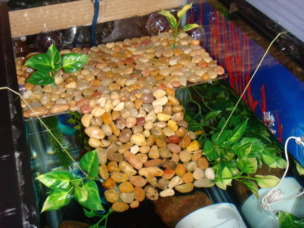 Turtle Tank Decor Turtle Habitat Indoor Pond Turtle Habitatjpg Cool Pinterest