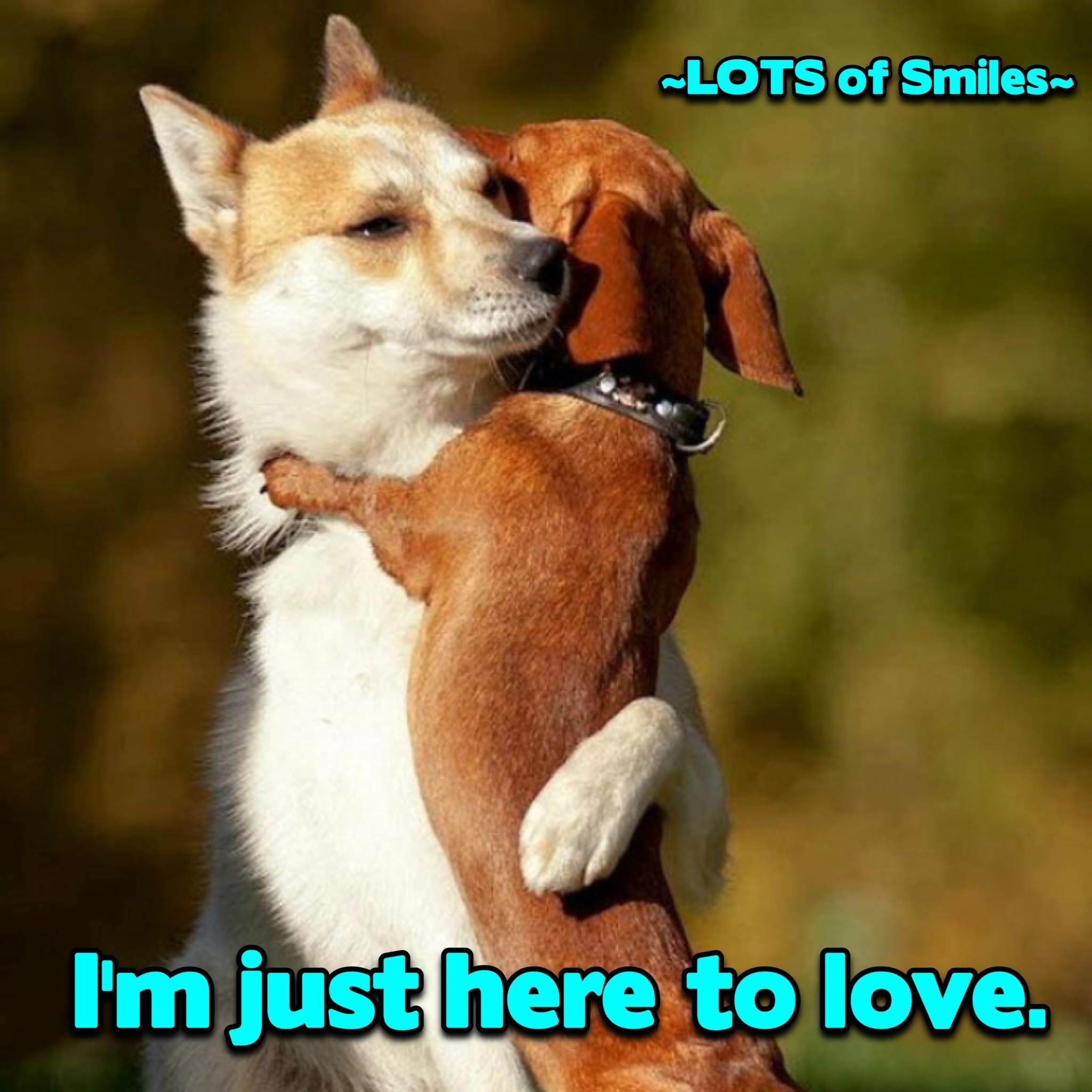 His Calling Is To Love Others Alllll Others Peace Sweet Nolawes Cute Animals