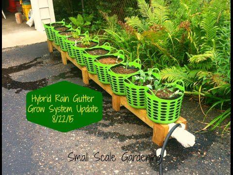 Ssg Hybrid Rain Gutter Grow System Update 8 22 2015 Youtube Gutter Garden Small Scale Gardening Gutters