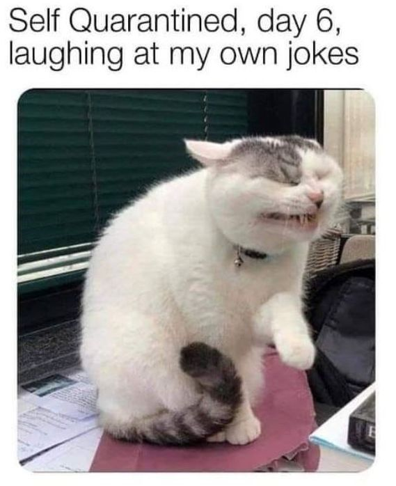 17 Funny Cat Memes About Being Quarantined Funnyfoto Funny Animal Jokes Funny Cat Memes Funny Relatable Memes