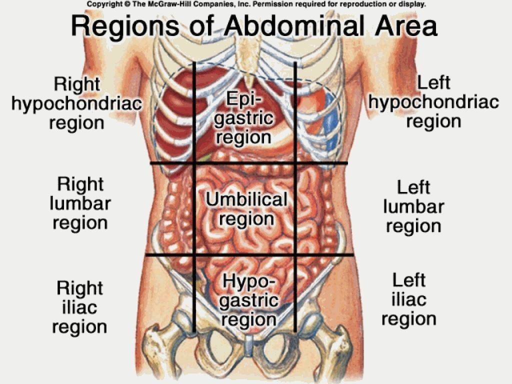 Anatomy Of Stomach Area Human Anatomy Pictures Pinterest