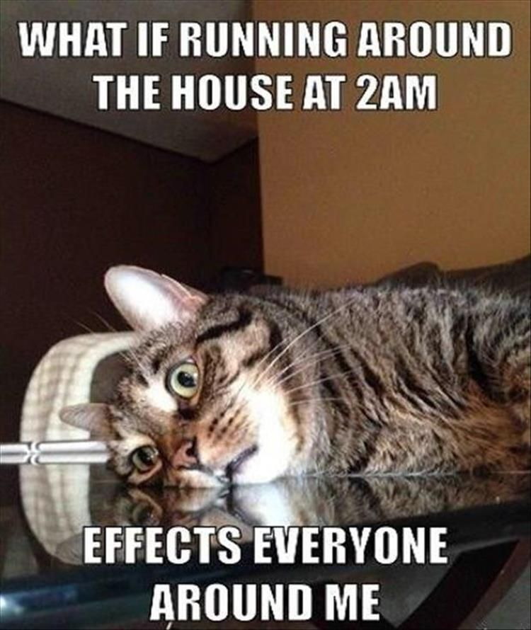 funny animal 5 cats funny cats funny funny animal pictures rh pinterest com