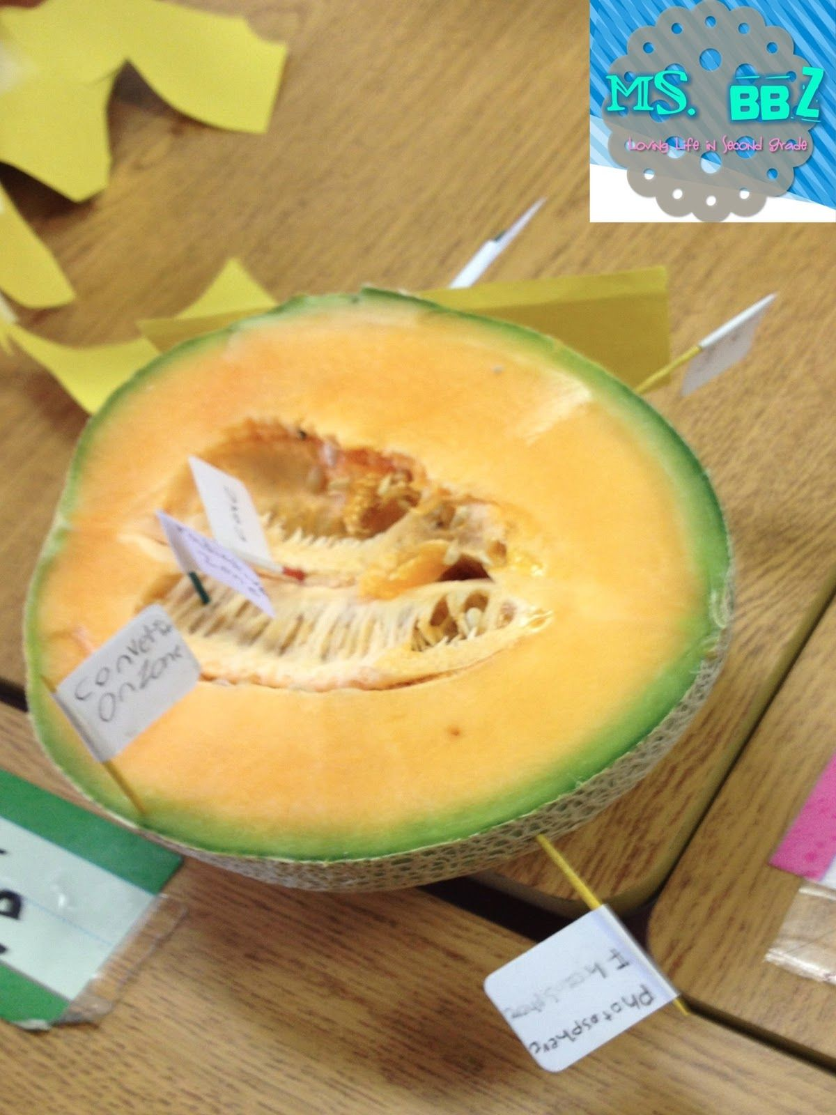 Using A Cantaloupe To Show The Layers Of The Sun