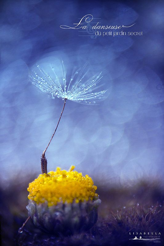 Macro by Lysabella Photographie