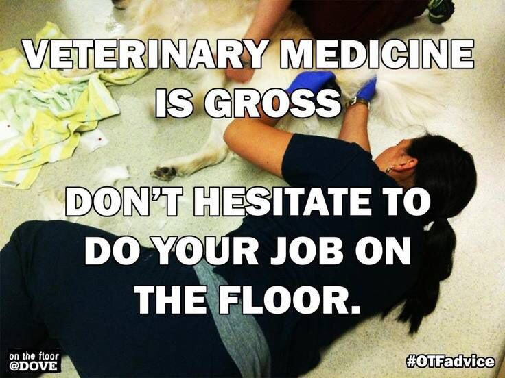 Funny Vet Tech Quotes. QuotesGram by @quotesgram | Being a ...