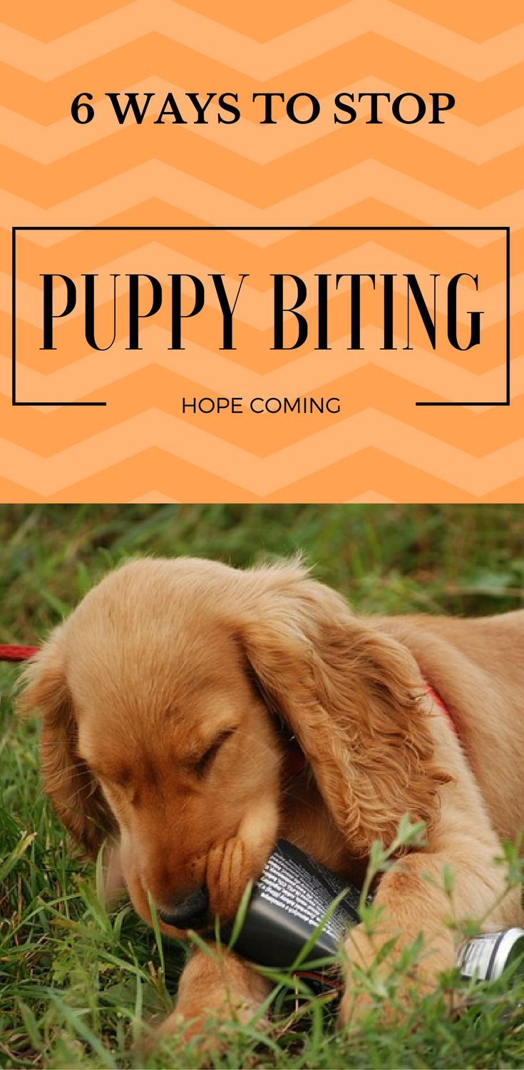The Ultimate Guide To Puppy Biting And Nipping Stop Puppy From