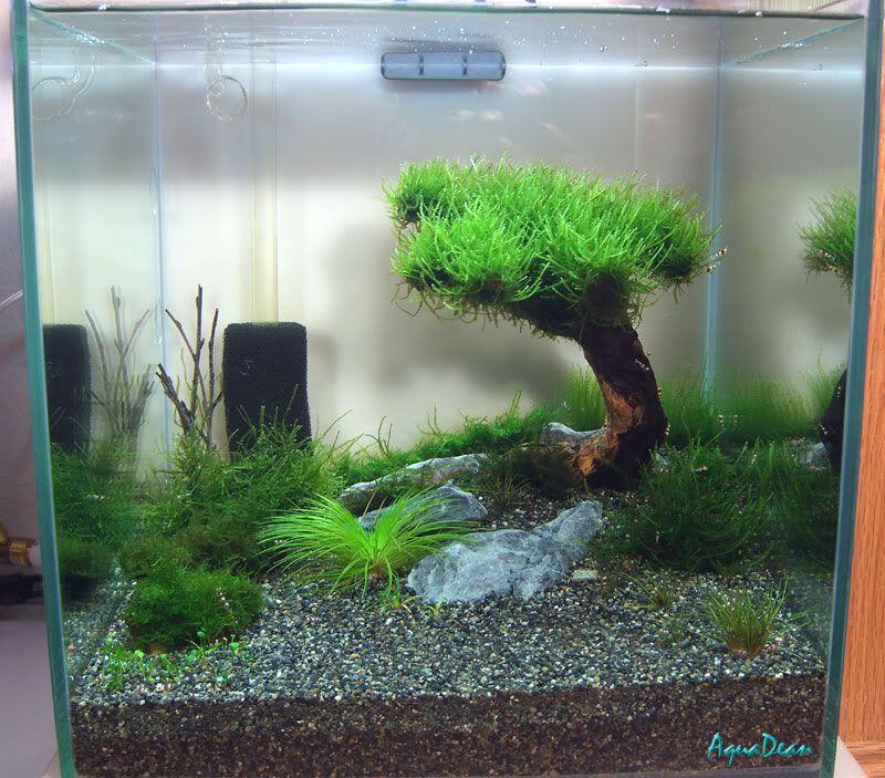 Deanu0027s 1 Foot Cube Tank Aquarium DesignAquarium