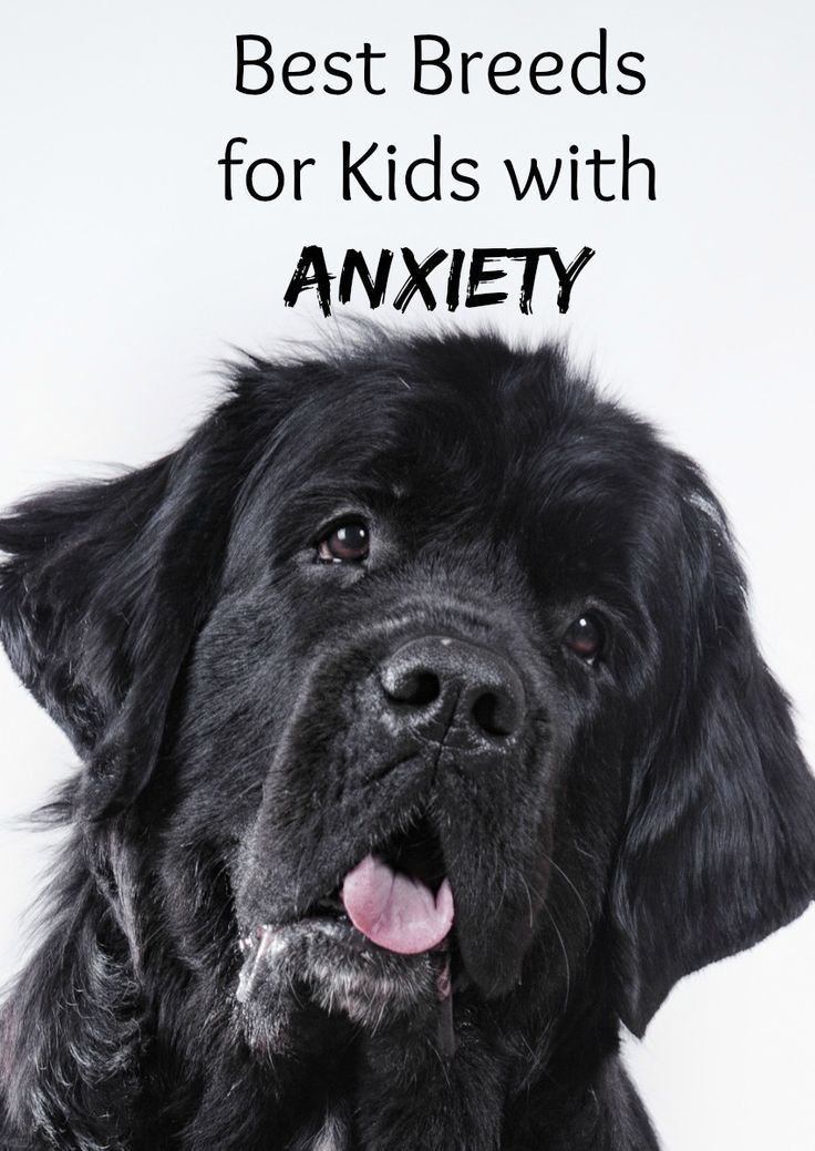 Best Dog Breeds For Kids With Anxiety Family Pets Pinterest