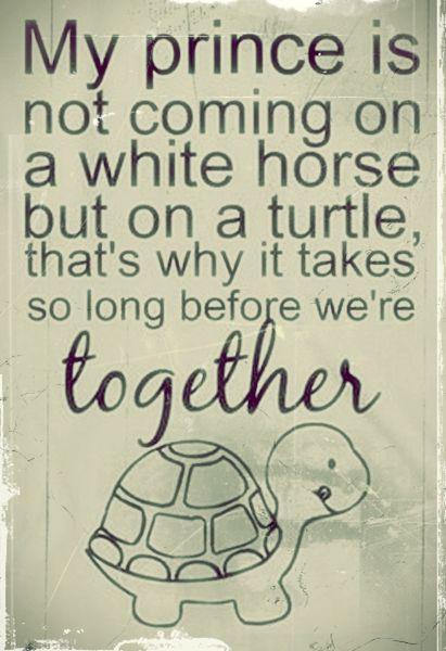 Turtle Sayings Cards   Zazzle  Turtle Love Sayings