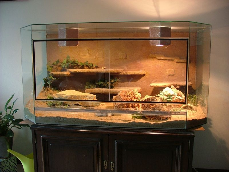 Love this! For my future bearded dragon ^_^ Dragon Pinterest
