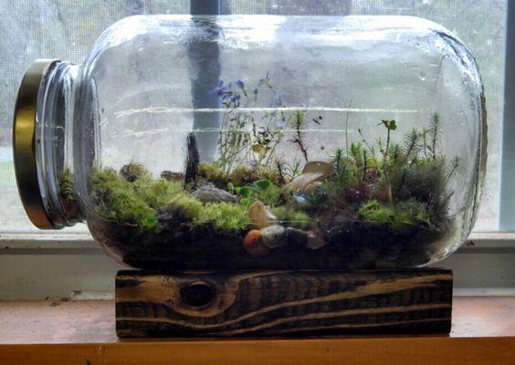 un mini terrarium fait maison 20 id es tutoriel vid o tutoriel video terrarium et fait. Black Bedroom Furniture Sets. Home Design Ideas