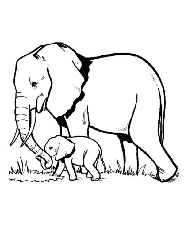 Pin By Netart On Classroom In 2020 Elephant Coloring Page Elephant Drawing Elephant Sketch