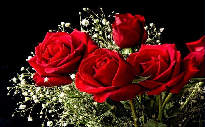 Imagenes De Rosas Para Descargar Imagenes De Flores Con Frases