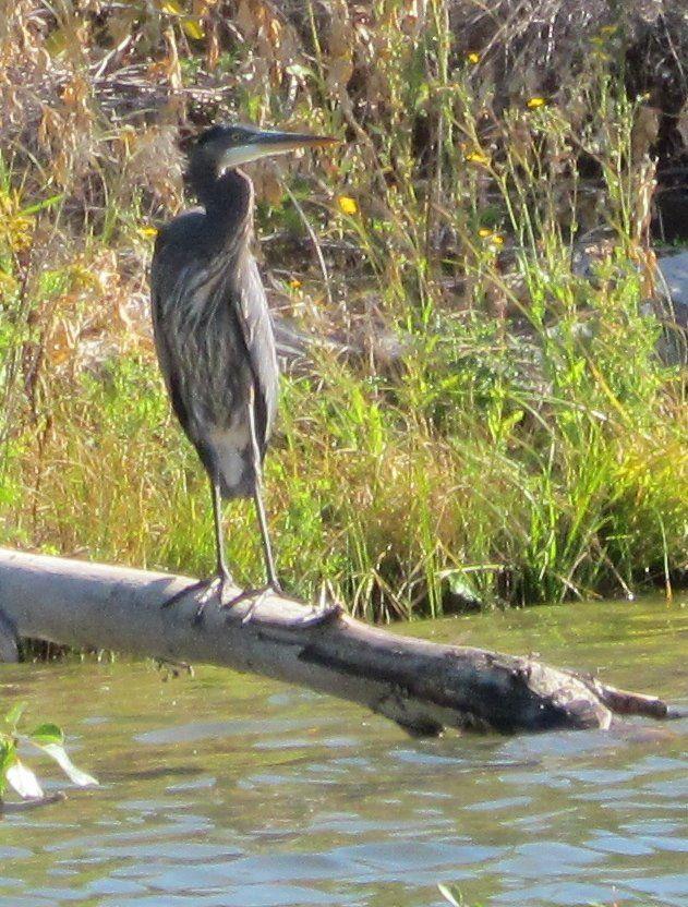 Taken from my canoe on Tuc El Nuit Lake