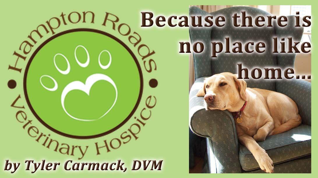 Pin on Hampton Roads Veterinary Hospice & Inhome Euthanasia