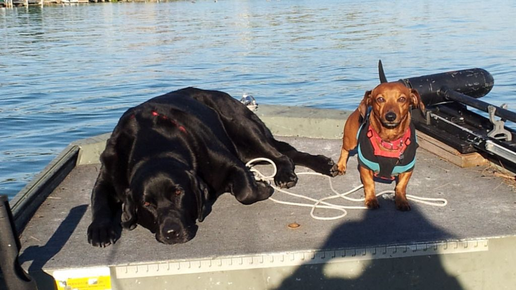 Out K9 friends love to join us on the seas. Follow this
