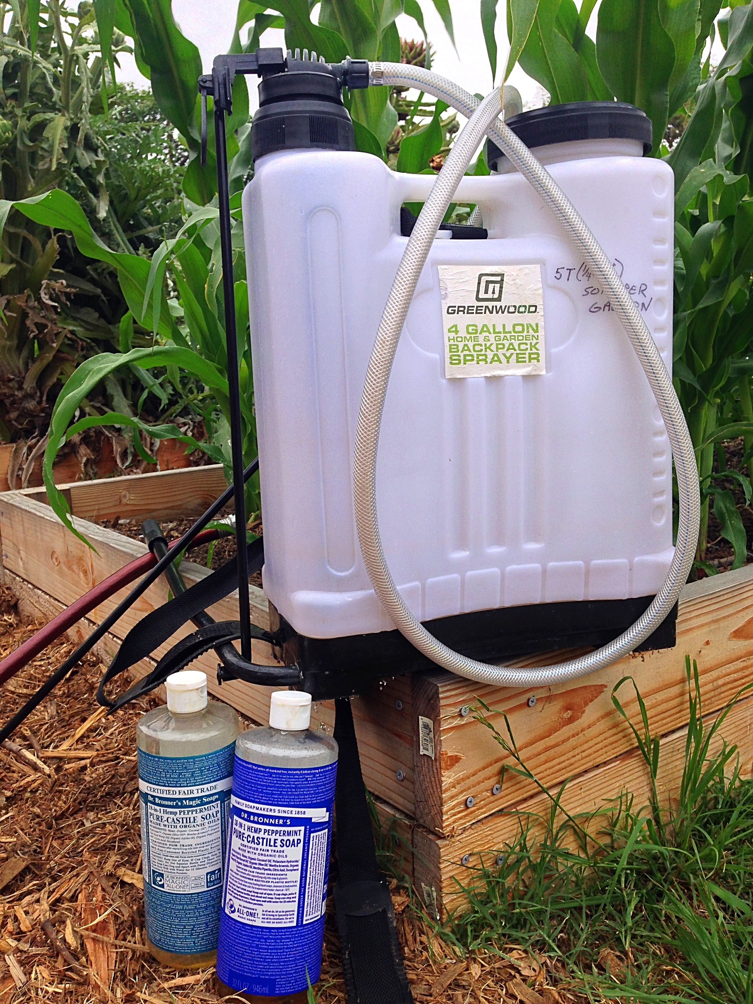 Homemade aphid or any soft shell bug spray aphids bug