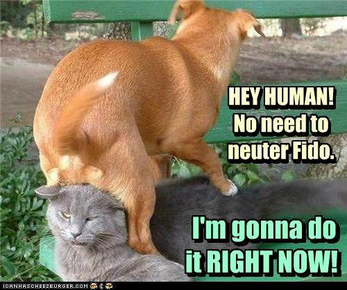 Bad Decision Fido Dog Jokes Funny Dog Jokes Funny Animals