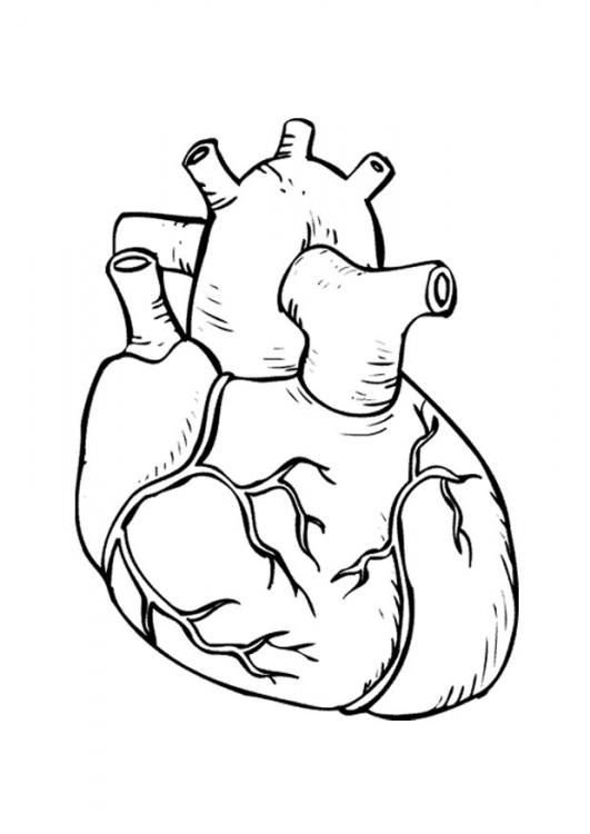 Human Heart Coloring Page With Coded Numbers For Making Some Parts