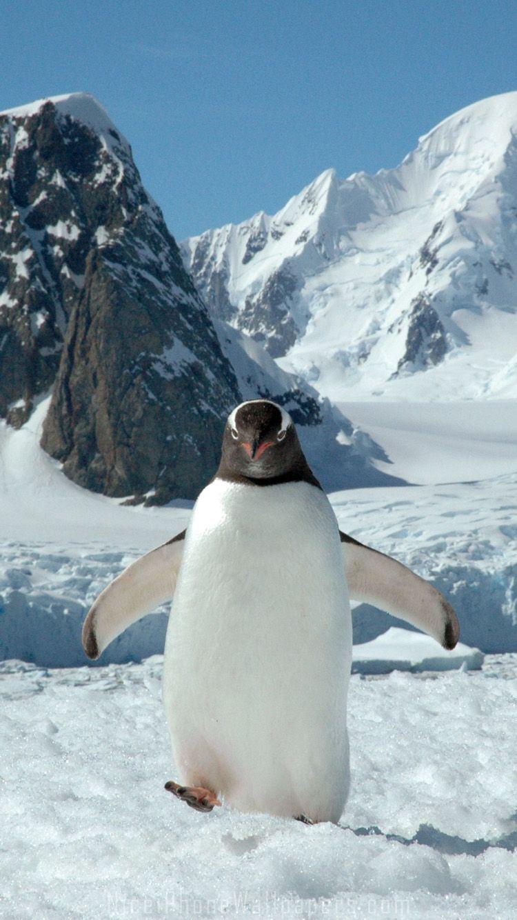 Penguin iPhone 6/6 plus wallpaper
