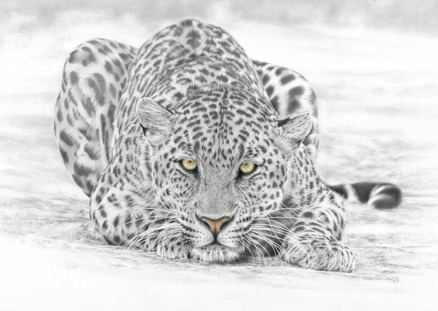 леопард рисунок карандашом старкримсон успешный результат