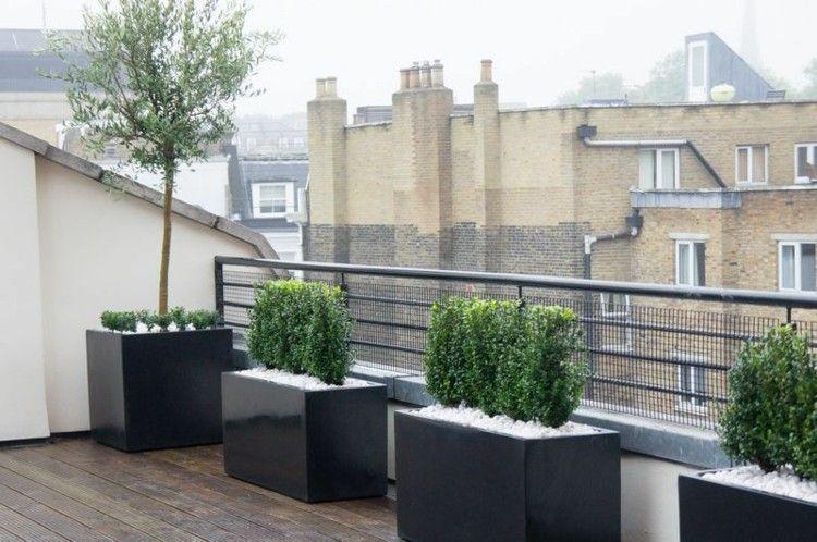 terrasse gestalten mit pflanzen in töpfen und olivenbaum, Haus und garten