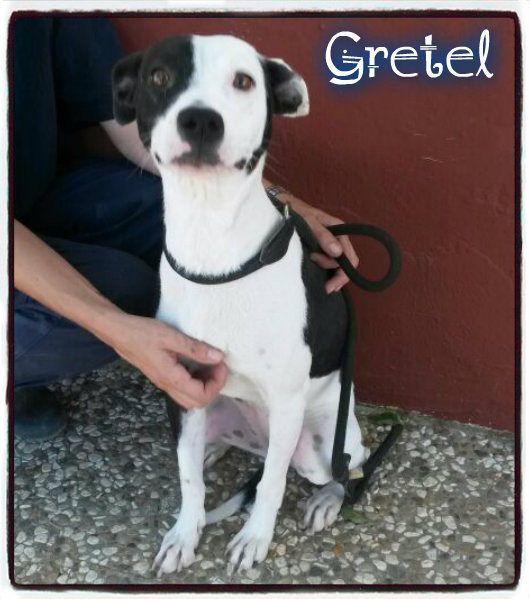 Gretel Perros En Adopcion Calor Humano Refugios
