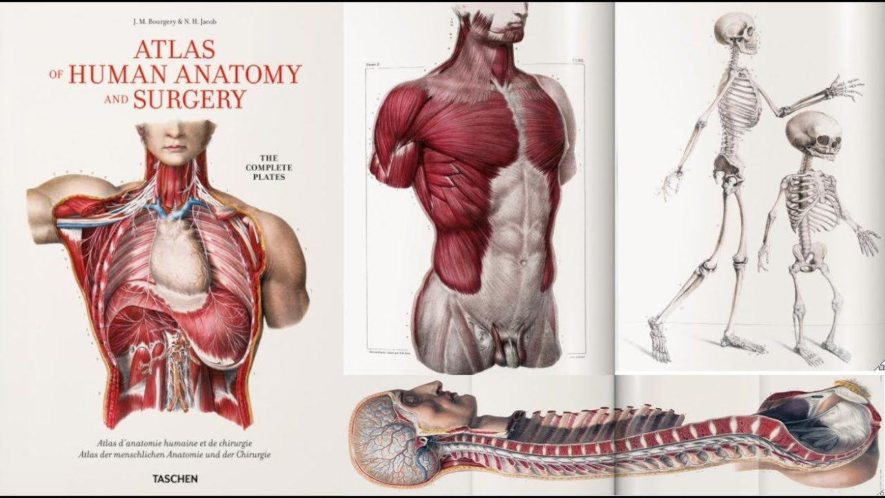 Order this Exclusive Atlas of Human #Anatomy and #Surgery at a ...