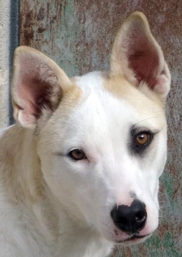 Mix Welpen Patch 5 Powerpaket Susseste Haustiere Haustiere Und Haustier Adoption
