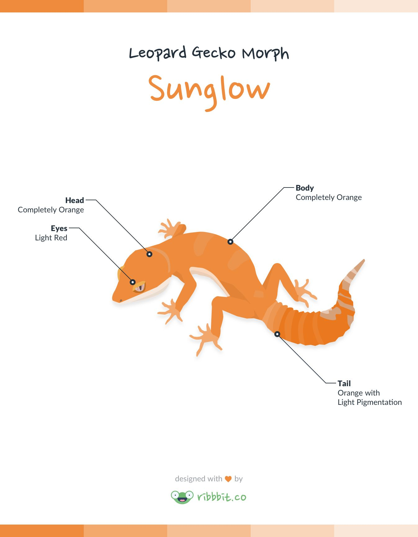 A Sunglow leopard gecko is the result of combining recessive albino ...