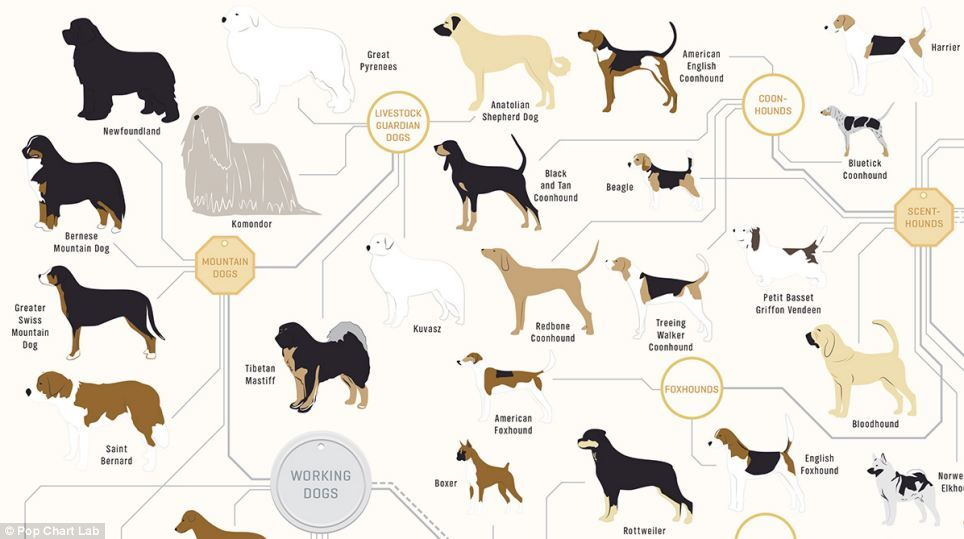Pin On The Family Tree Of Dogs