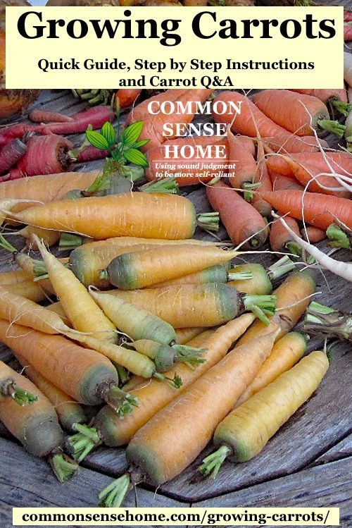 Growing Carrots From Planting To Harvest Carrot Q A 400 x 300