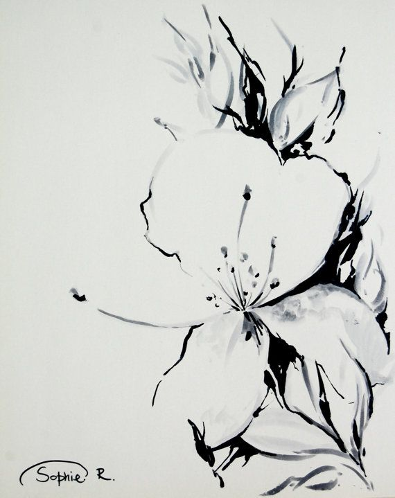 Jasmine Flower Original Drawing Black And White Botanical Floral