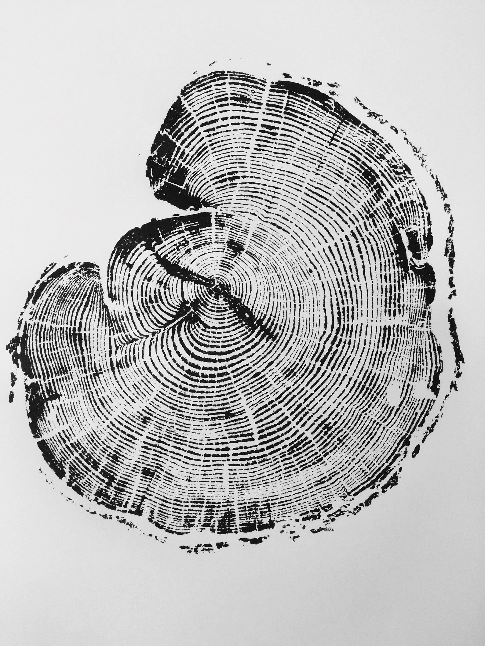Woodcut, Tree rings print, Tree slice, Woodblock a