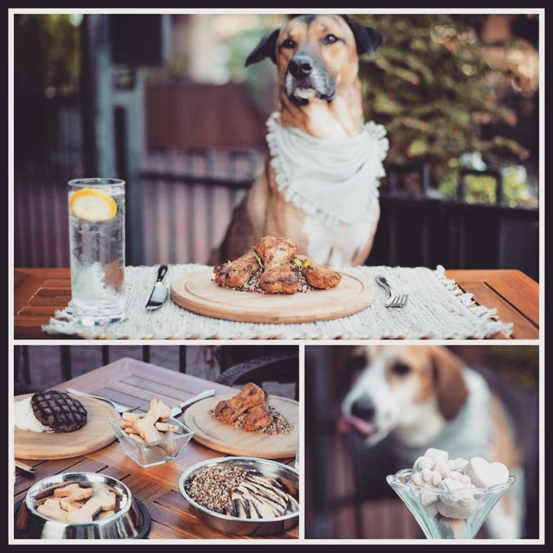 9 Best Dog Friendly Restaurants In Asheville Nc Rover