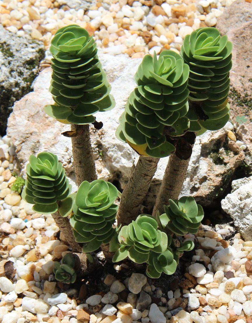 Piante Grasse Da Giardino aquascape garden snorkel trip (con immagini) | piante grasse