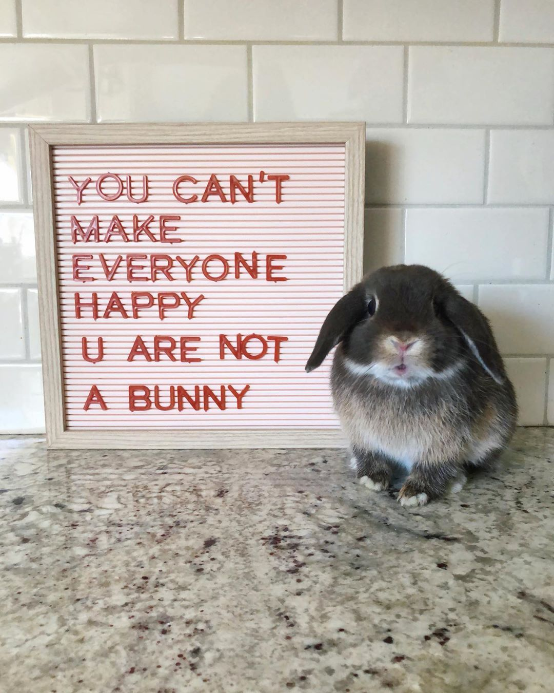 Quality advice from one bunny to any hooman...