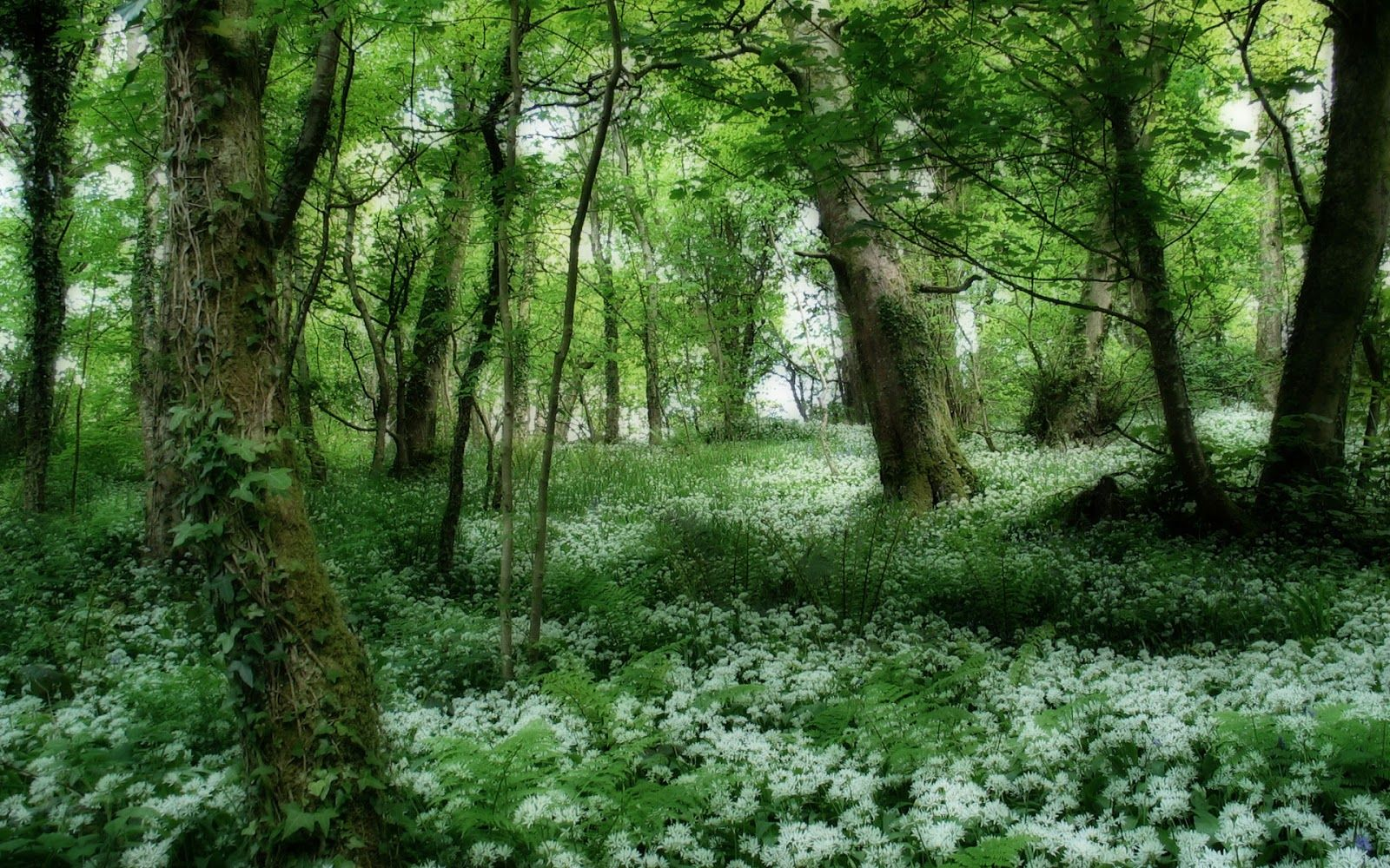 The Beautifull Nature Green Tree Beautiful Forest Forest Wallpaper Tree