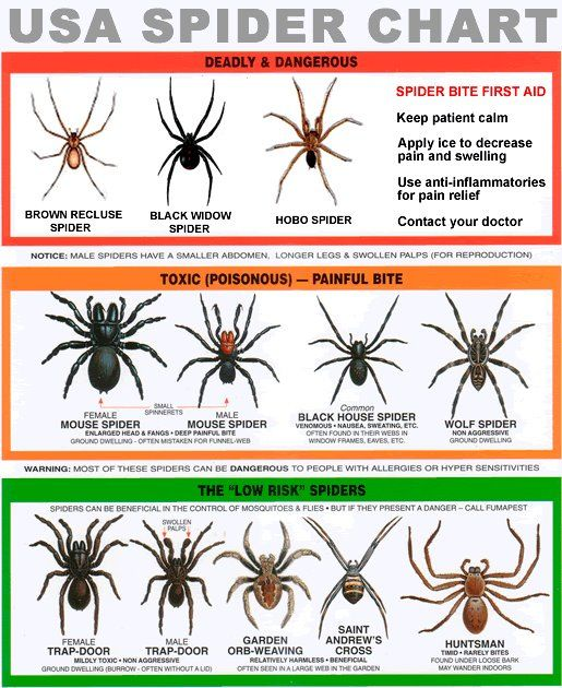 poisonous spiders of south carolina on the job spider rh pinterest com