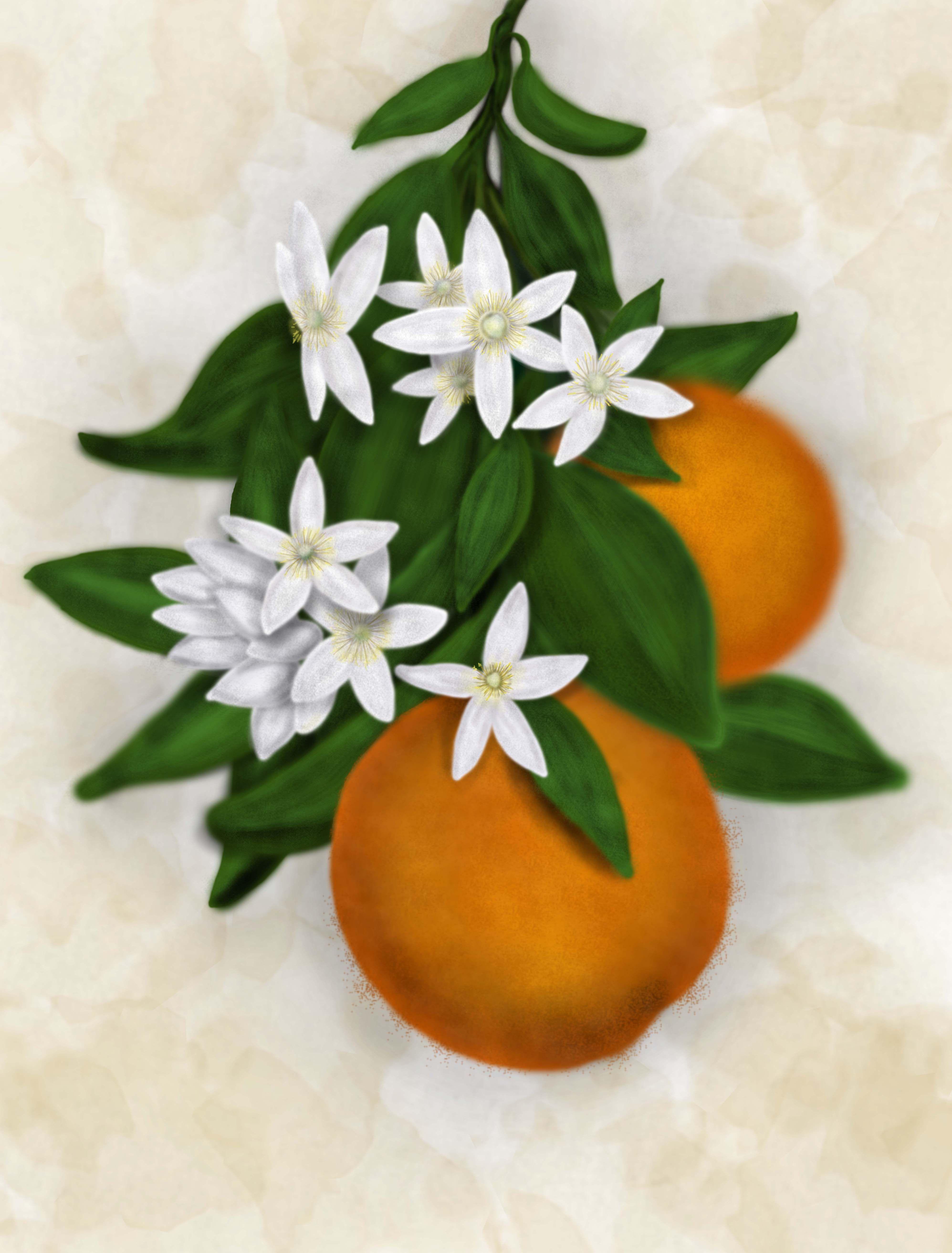 Orange Blossoms  Google Search