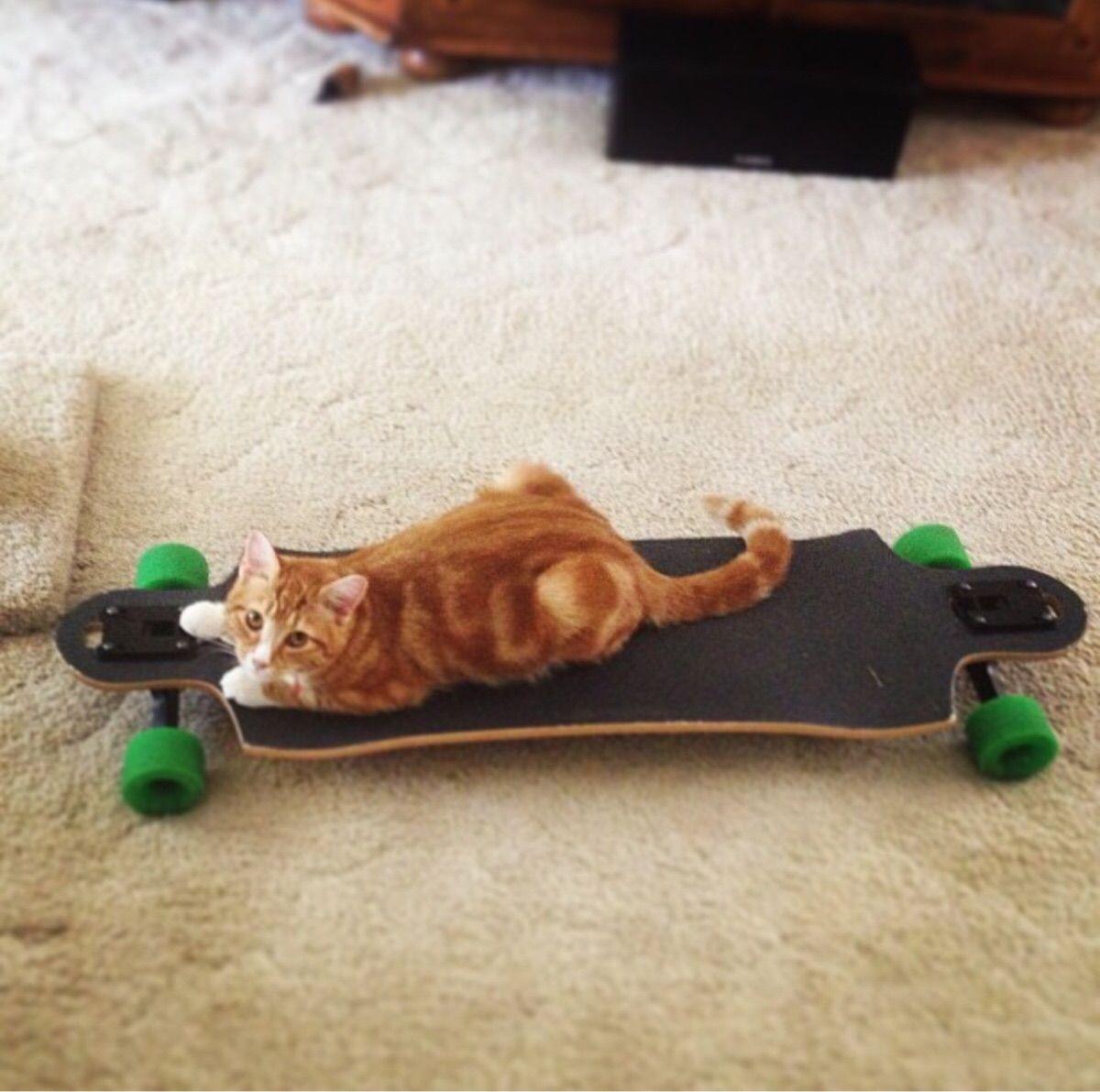 Longboard Lovin'