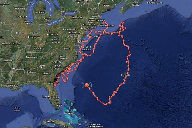 Track Foot Great White Shark Mary Lee As She Heads Back Down - Great white shark range us map