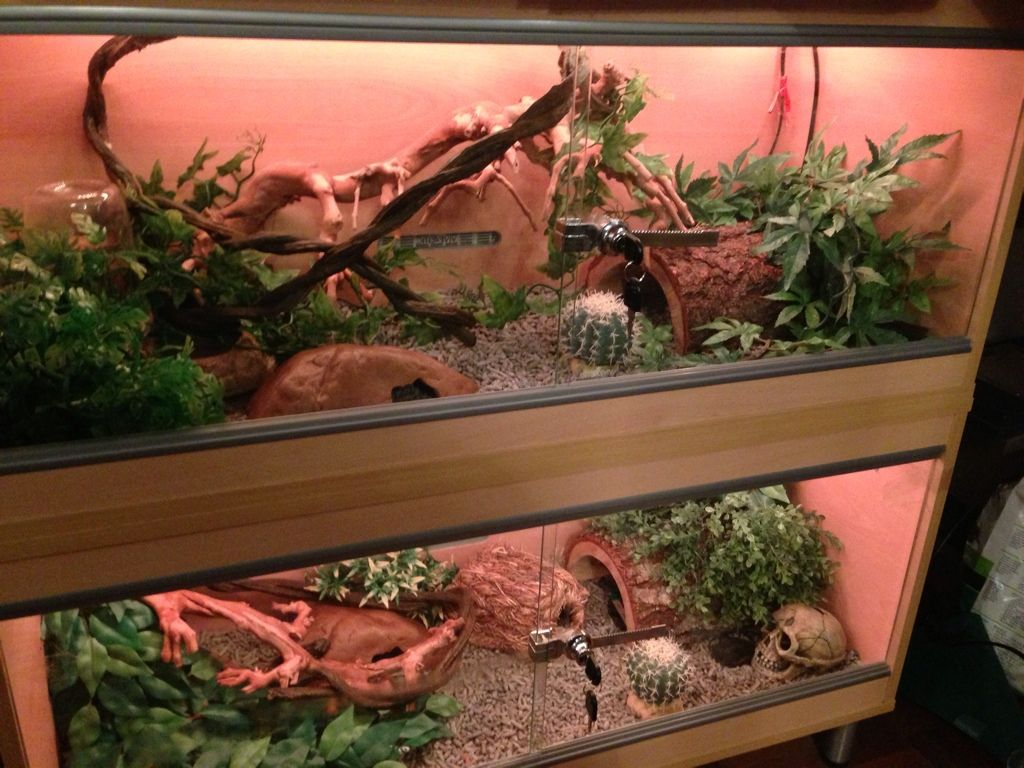 The Corn Snake Forum Pimping Out A New Vivarium Ideas Corn