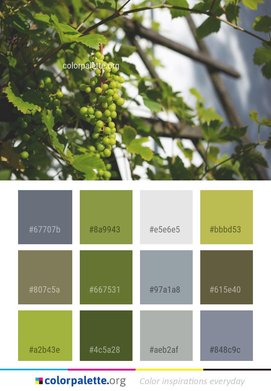 tree grapevine family grape color palette colors 26 color textura rh ar pinterest com