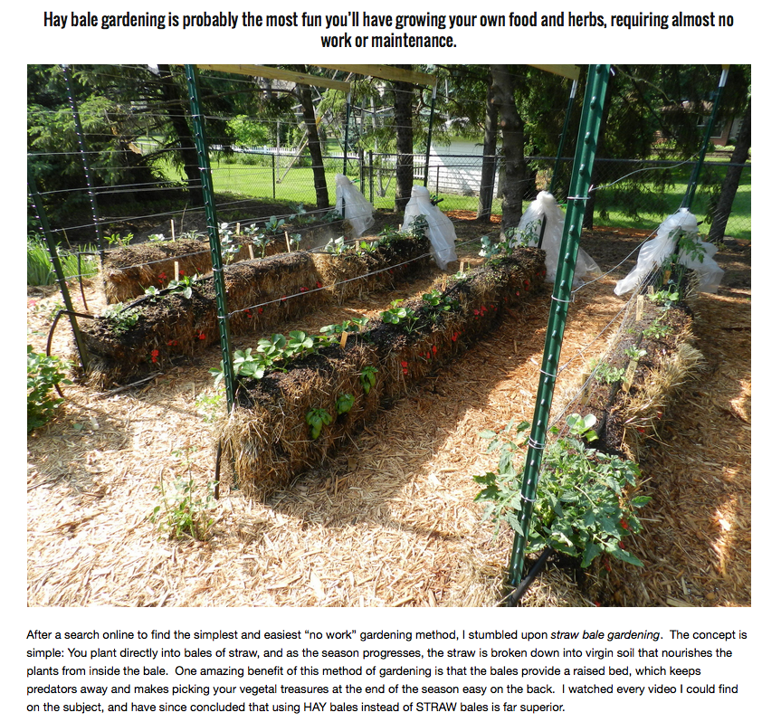 hay bale gardening no weeds no fertilizers and less watering rh pinterest com